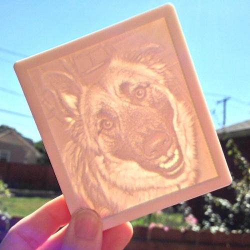 Shepherd Dog in Sun
