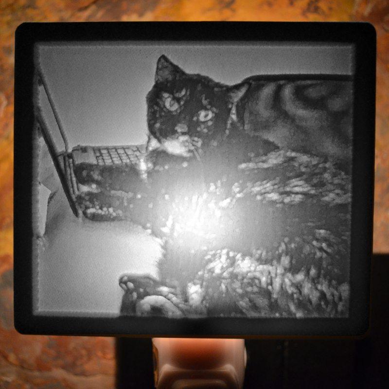 kitty memorial lit