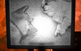 2 pups nightlight