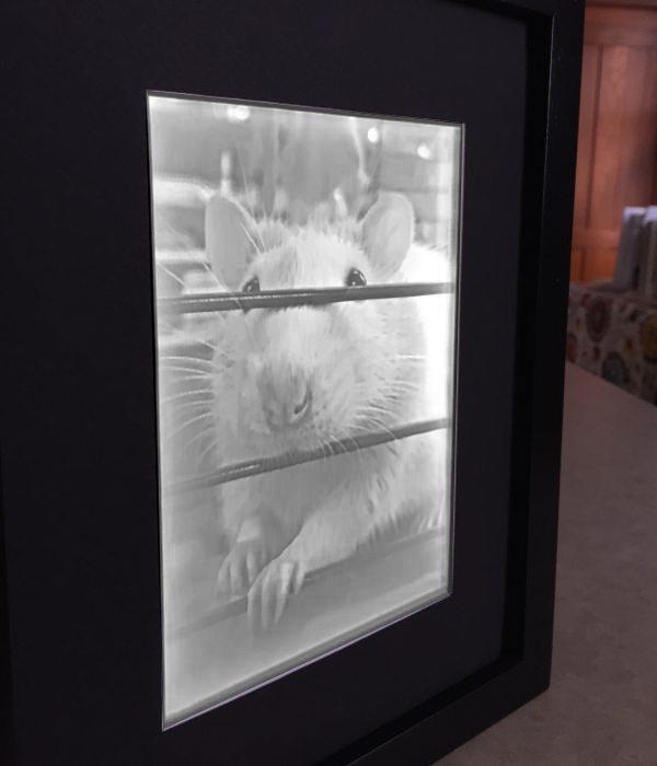 Framed2_5x7_Atticus_600x700